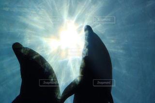 2頭のイルカと光と影の写真・画像素材[1697814]