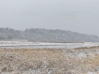 雪が降ってきたの写真・画像素材[1817954]