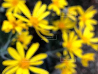 自然,花,春,黄色,イエロー