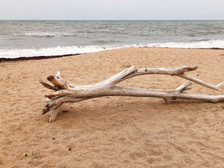 自然,砂浜,波,海岸,流木,太平洋,ミルクティー色