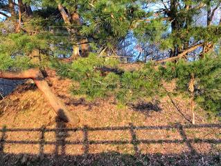 私の影にドキッの写真・画像素材[2074459]