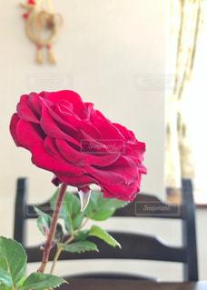 薔薇の写真・画像素材[2155574]
