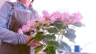 花の手入れの写真・画像素材[2268147]