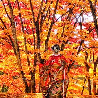 紅葉の花嫁の写真・画像素材[2397501]