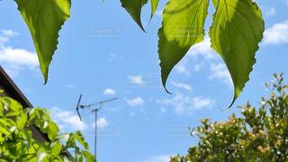 空の写真・画像素材[2413108]