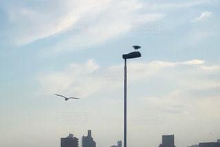 海鳥の写真・画像素材[2994644]