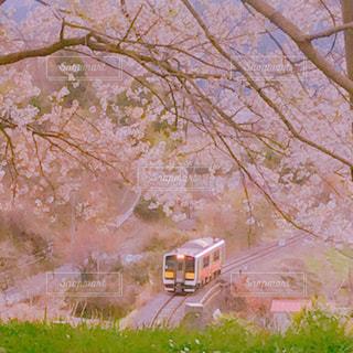 桜,満開,列車,水郡線,戸津辺の桜,矢祭町