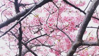 木の枝にとまった鳥の写真・画像素材[1820998]