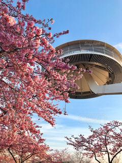 花,春,桜,お花見,女子旅,なばなの里,ツアー,お空