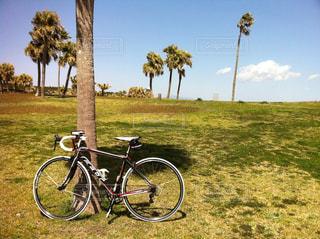 夏,景色,サイクリング,ロードバイク,自転車、