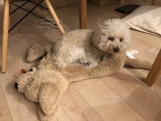 リラックスする犬の写真・画像素材[1702523]