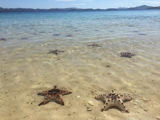 自然,海,ビーチ,旅行,海外旅行