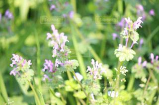 小さな春の写真・画像素材[2026971]