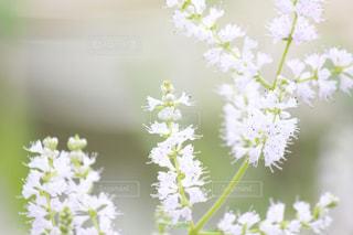 柔らかな白の写真・画像素材[2039122]