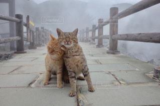 猫2匹の写真・画像素材[1703714]