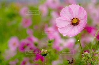 植物にピンクの花の写真・画像素材[1792817]