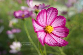 近くの花のアップの写真・画像素材[1792884]