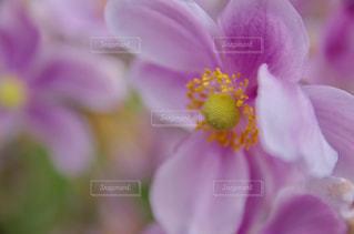近くの花のアップの写真・画像素材[1794796]