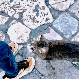 野良猫の写真・画像素材[1798638]