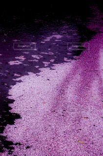 流れる桜の写真・画像素材[1800976]