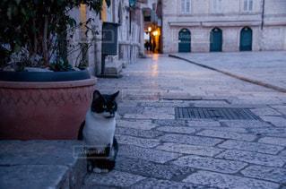 猫,風景,夜,動物,海外,ヨーロッパ,観光,旅行,明かり,路地,海外旅行,通り,クロアチア,城壁,フォトジェニック,ドブロブニク,城壁都市,猫歩き
