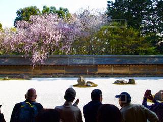自然,風景,花,春,桜,庭,京都,ピンク,神社,花見,景色,お花見,人,寺,日中,さくら,フォトジェニック,桜まつり