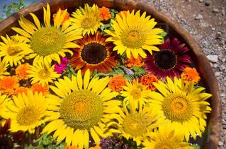 近くに黄色い花のアップの写真・画像素材[1842463]