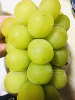 フルーツ,果物,マスカット,シャインマスカット
