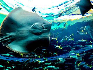 水面下を泳ぐ魚たちの写真・画像素材[1704053]