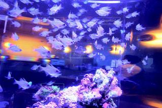 海,夏,魚,かわいい,カラフル,水,水滴,反射,ガラス,光,小さい,ブルー,夏休み,水槽