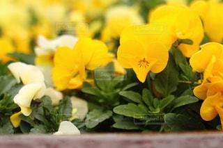 花,春,名古屋,名城公園