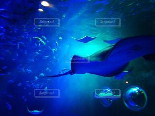水面下を泳ぐ魚たちの写真・画像素材[1704822]