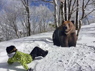 雪の中を歩いているクマの写真・画像素材[1712868]