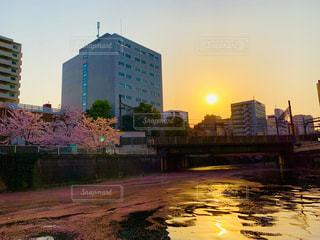 夕日と桜に染まる目黒川の写真・画像素材[1984742]