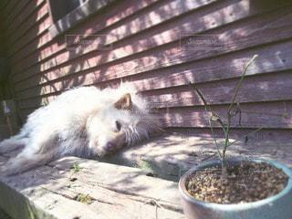 犬の写真・画像素材[14229]