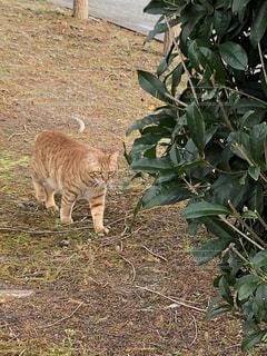 猫,動物,屋外,草,ペット,ネコ
