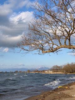 水域の隣の木の写真・画像素材[2432917]
