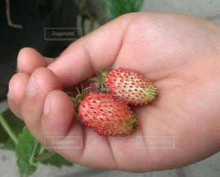 自分でつくるイチゴは甘くて美味しいね♡♡の写真・画像素材[1765747]