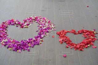 花,ピンク,赤,花びら,ハート