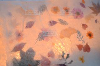 氷の押し花の写真・画像素材[1738816]