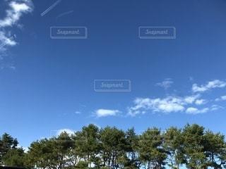 木の上に空気を通って飛んで人の写真・画像素材[1707863]