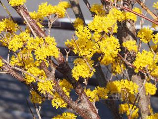 風景,花,春,晴れ,散歩,黄色,幸せ,花粉