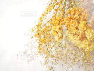 黄色のドライフラワーの写真・画像素材[1827577]