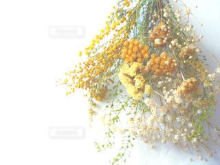 黄色のドライフラワーの写真・画像素材[1827609]