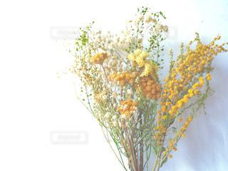 黄色のドライフラワーの写真・画像素材[1827610]