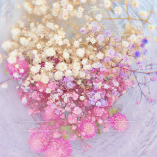春色のドライフラワーの写真・画像素材[1954518]