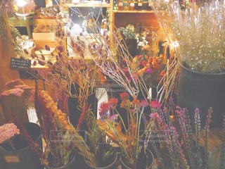 ドライフラワーの写真・画像素材[1987934]