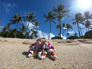 旅行,ハワイ,Hawaii,海外旅行