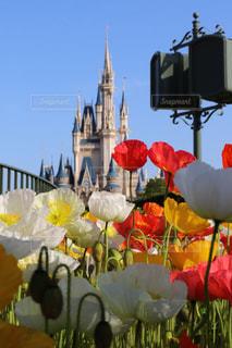 花,カラフル,城,お城,チューリップ,鮮やか,パステル,お洒落,カラー,パステルカラー,キュート,ビビットカラー,おしゃれ,華,ファンシー,王子様,インスタ映え
