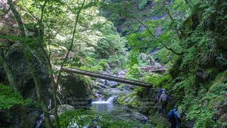 森の中の人々のグループの写真・画像素材[2221520]